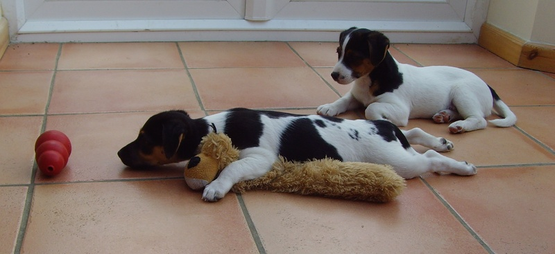 Puppy training 3 weeks